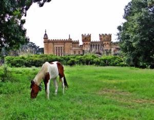 Pferd auf Weide mit Brennesseln